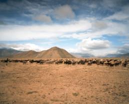 M41. Gorno-Badakhshan