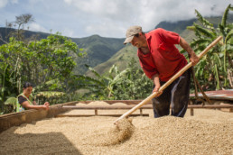 The origins of coffee. Antioquia, Colombia.